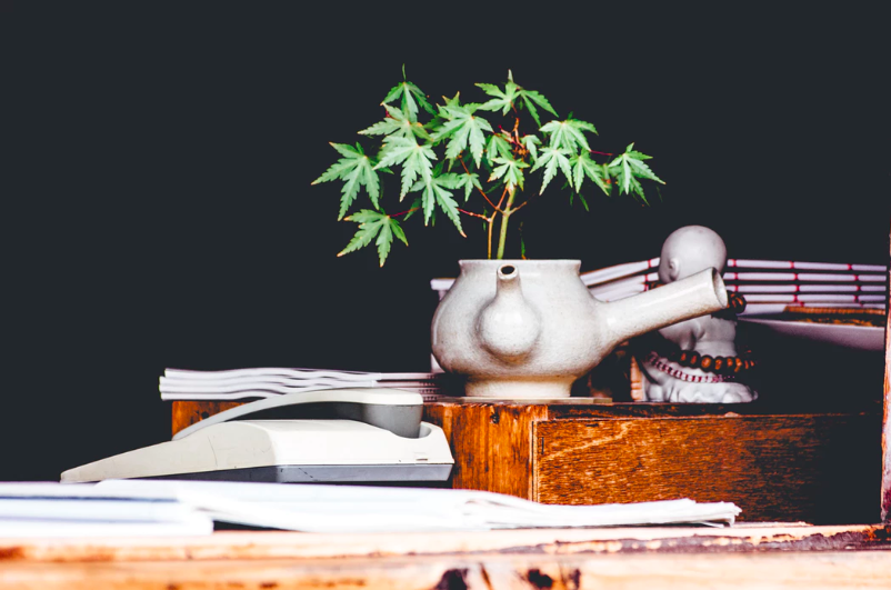 It is essential to take time investigating and surveying traditional american cannabis use and production to come to an agreement on modern usage.