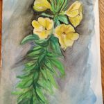 primrose flower essence